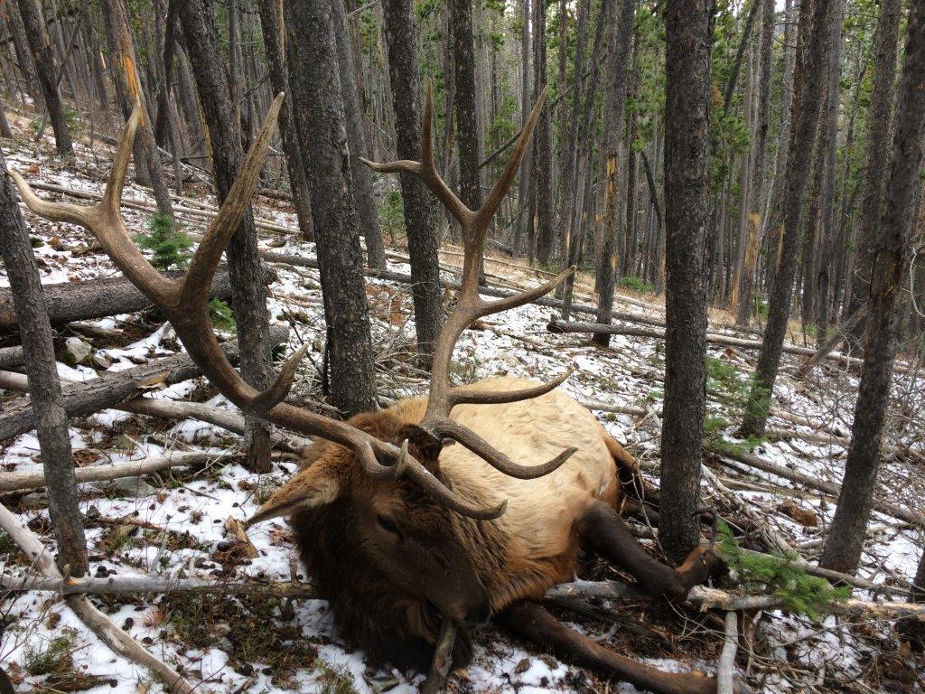 prime_elk_property