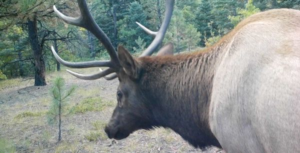 Conservation Partner: RMEF
