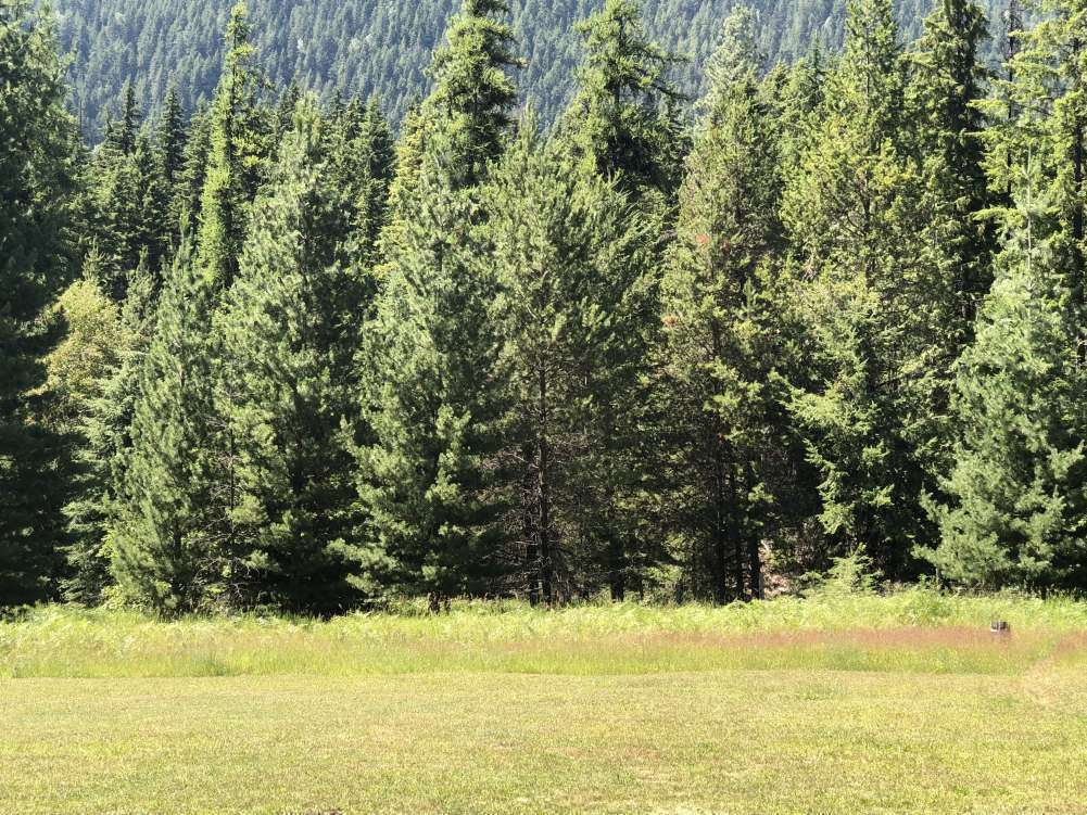 Gorgeous 102.65 acres of truly unfettered land!!!