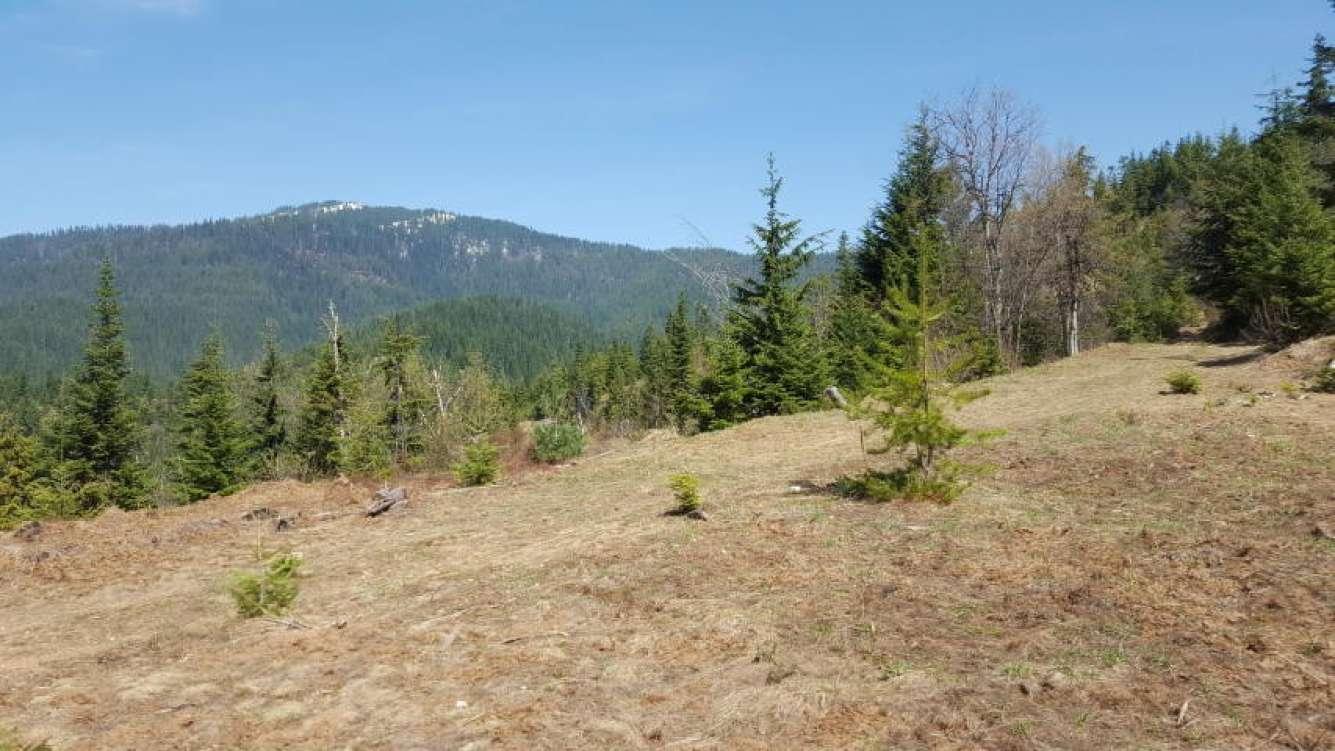 Cougar Mountain View