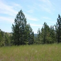 Yellowstone Valley Views Property Photograph