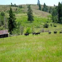 Brenner Cattle Ranch