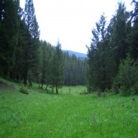 Surrounded by Forest Service Land! Property Photograph