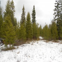 Northern Beauty at the Moyie River Property Photograph