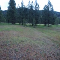 Affordable 40 Acres Western Montana Property Photograph