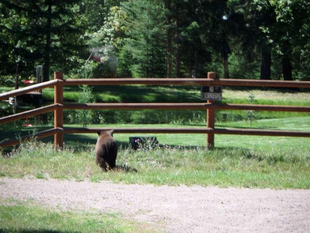 Quintessential Montana! Property Photograph