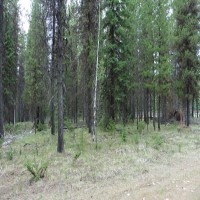 5 Acres on West Fork of Yaak River Property Photograph