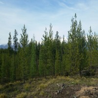 Elk Creek Preserve Lot 5