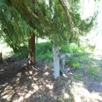 Sagle Sanctuary Property Photograph