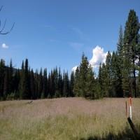 Bismark Meadows
