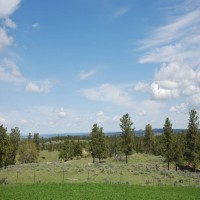 Timberline Stock Elk Ranch