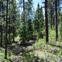 North Brush Creek Preserve Property Photograph