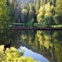 Montana Water Oasis