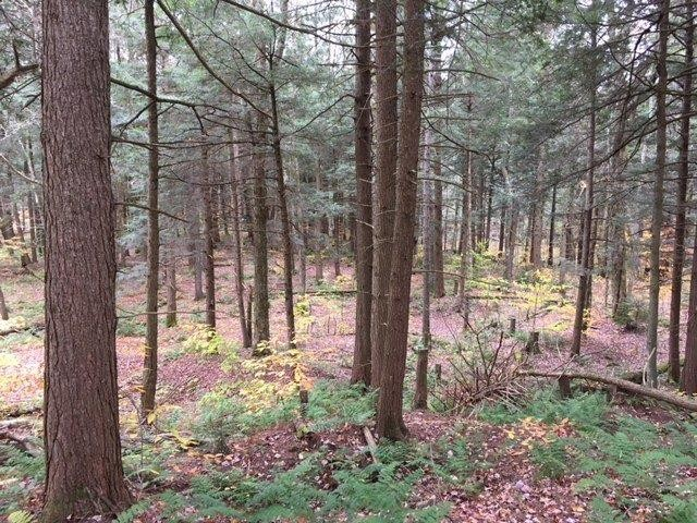 118 acres Timber in Florence NY borders State Land Property Photograph