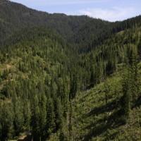 Cougar Mountain  Property Photograph