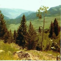 Grizzly Meadows Parcel Property Photograph