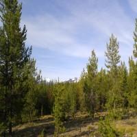 Elk Creek Preserve Property Photograph