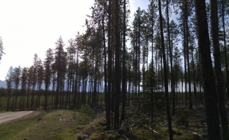 Elk Creek Preserve Lot 3