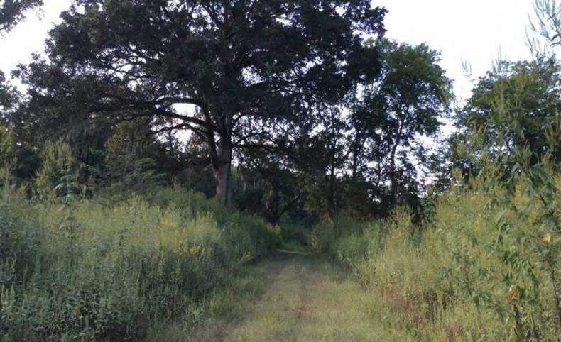 Davis Estate, Grant Parish, 1,000 Acres +/-