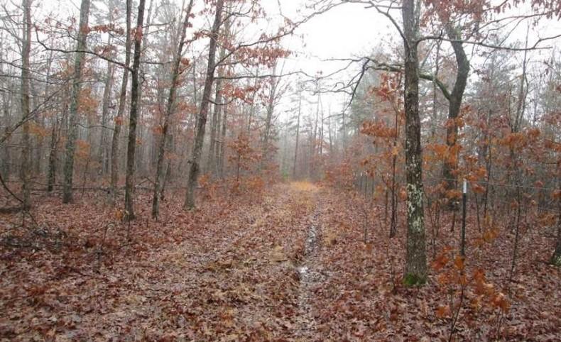 597 Acres in Reynolds County, Missouri