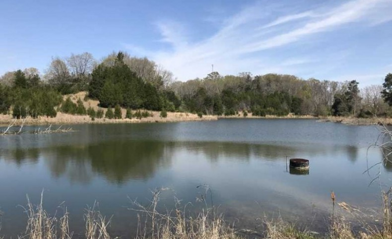 Excellent Hunting Tract 550 +/- Acres in Sumter Co., AL near Livingston