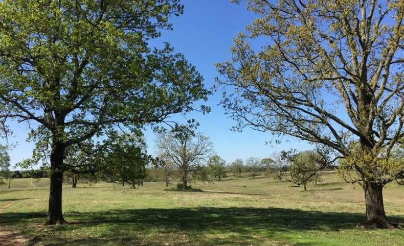 Large Contiguous Cattle Farm with Plantation style Home