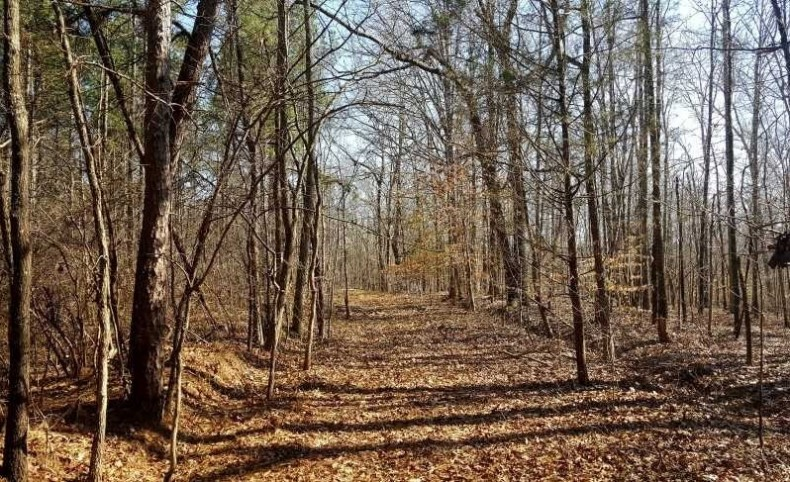 4349 ACRES WELL MANAGED TIMBERLANDS