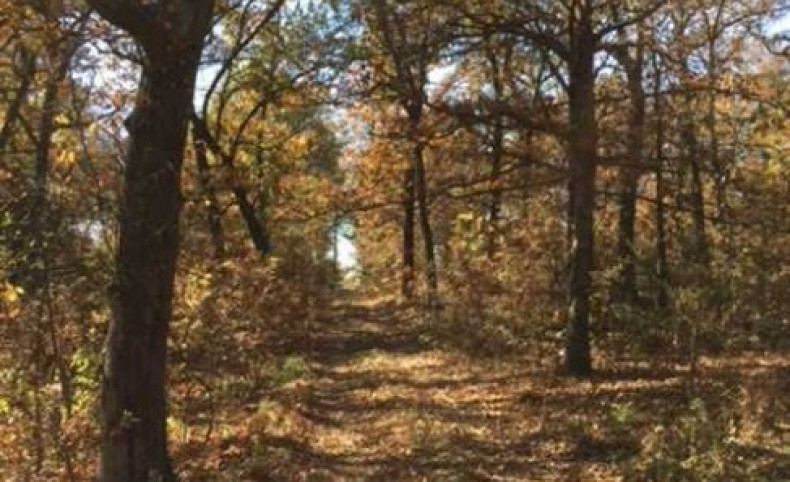 Reduced! 183 Acres Beautiful Home Site or Development Property Linn Creek, Mo