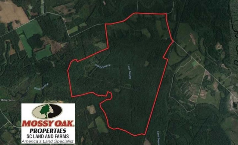 REDUCED! 822.23 Acres of Hunting Land For Sale in Williamsburg County SC!