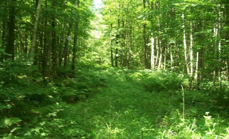 190 acres of Prime Hunting Land Marathon County