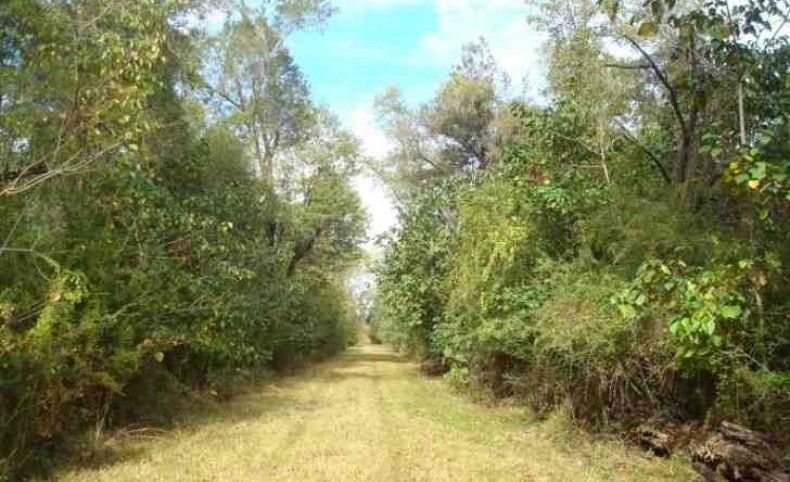 1549 +/- Acres Hunting, Development & Timber Land, Picayune, MS 39466, Pearl River Co. less than 1 hr. from the Gulf Coast & New Orleans.