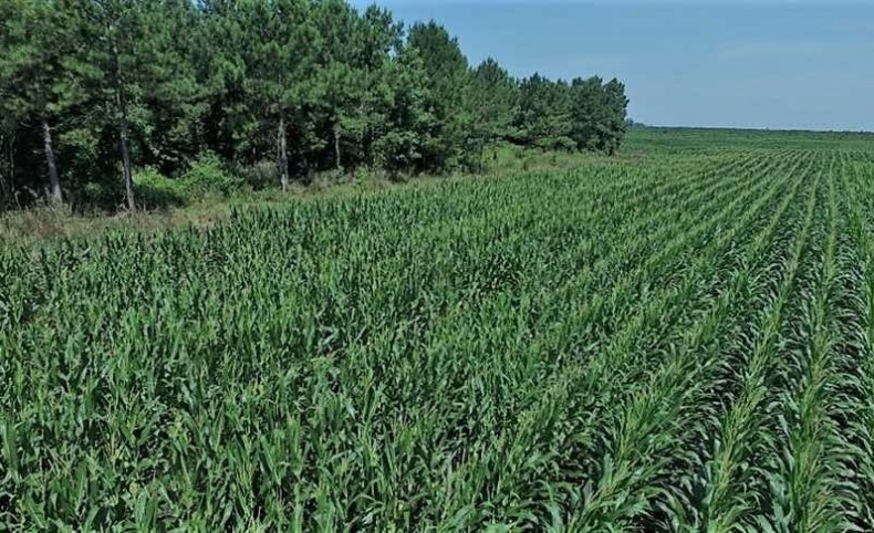 4000 Acres of Timber and Farm Land For Sale in Pamlico County NC!