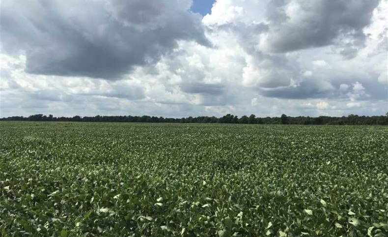 1025 +/- Acres, 903+/- Row Crop Acres, Lee County, 1 Irrigation Well, 1 - 14 Tower Pivot, Rich Mississippi River Delta Soil