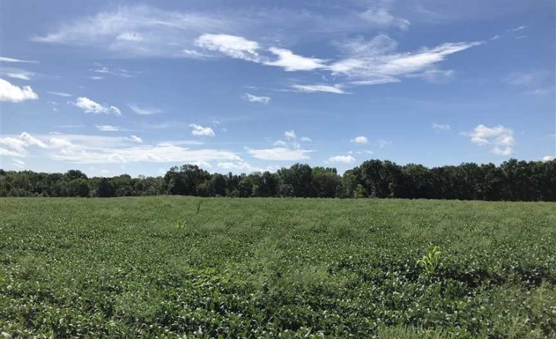 155 +/- Acres Row-Crop, Pasture, and Hunting on 52 Highway Henry County Missouri