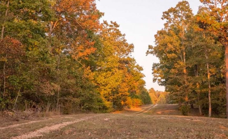 Large Log Home on 158+/- Acres For Sale in Ripley County, Doniphan, Missouri