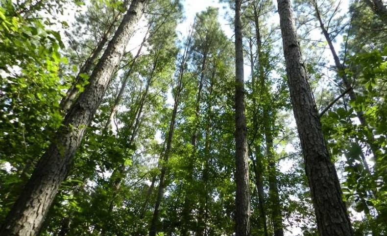 668 Acres - Ramer - McNairy County