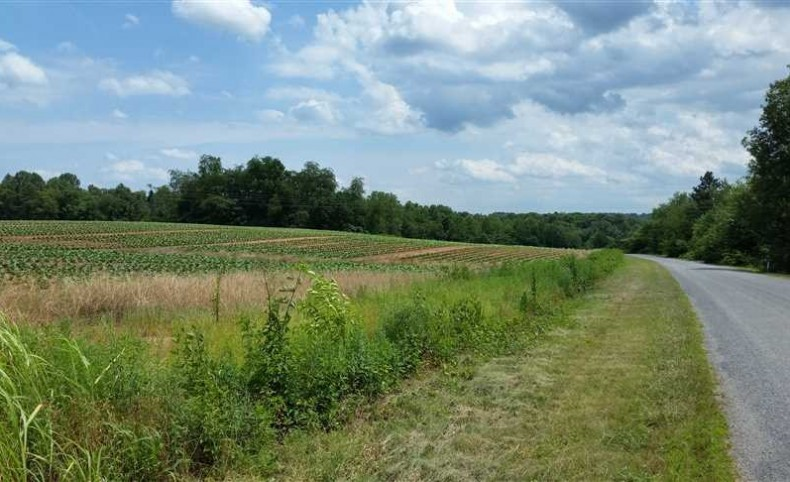 499 Acres in Yadkin County (Sherrill Tract)