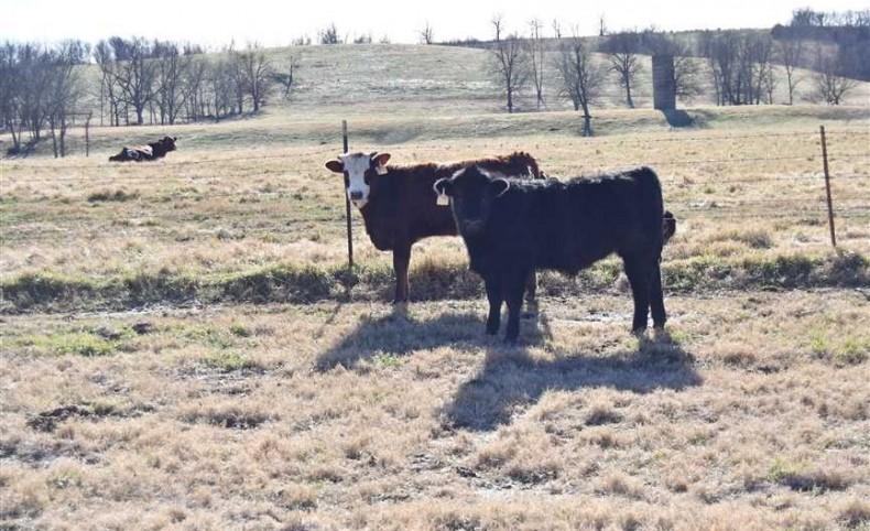 Goodman Ranch 270