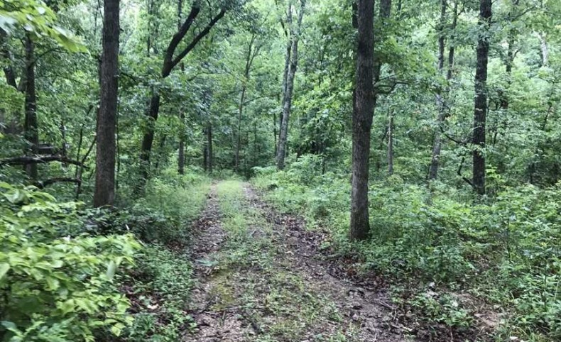 Reduced! 318 Acres of Some of the Best Hunting in Missouri