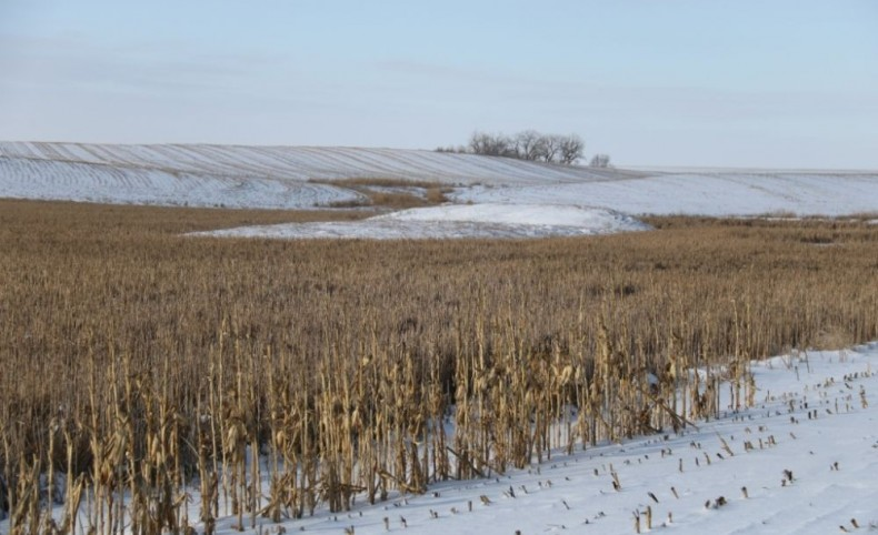 Quality Cropland and Outstanding Hunting!