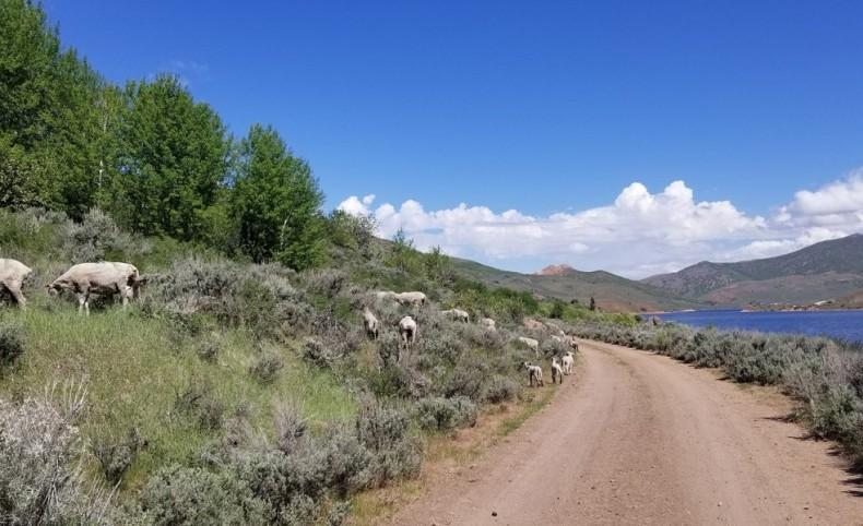 Dixie Hollow Ranch