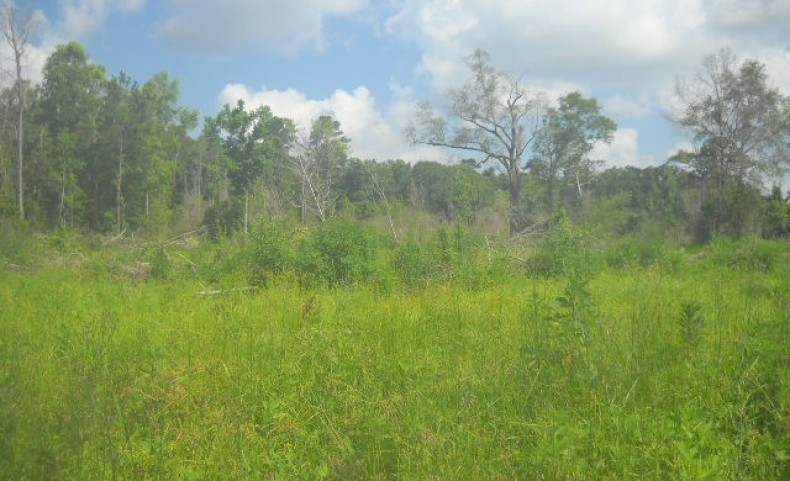 395 ac - W Factory St - Tangipahoa Parish Louisiana Mitigation Land for Sale