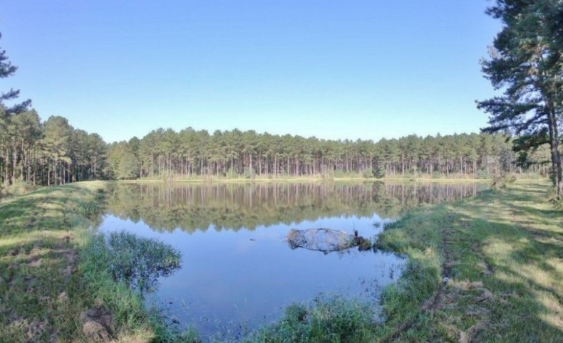 World Class Hunting Property SW MS