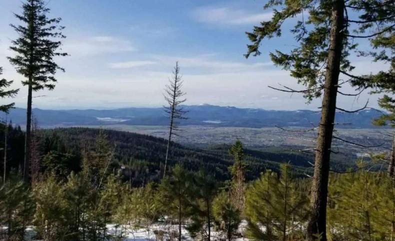 Blossom Mountain Views