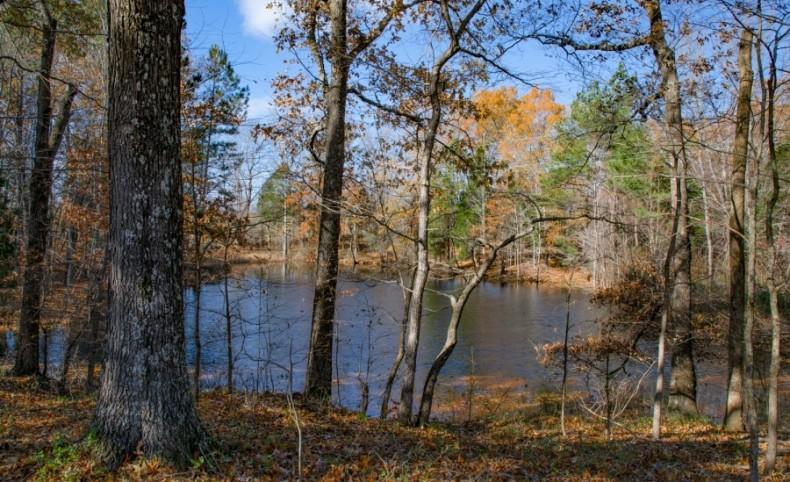 256.24 Acres +/- in Weakley County, TN
