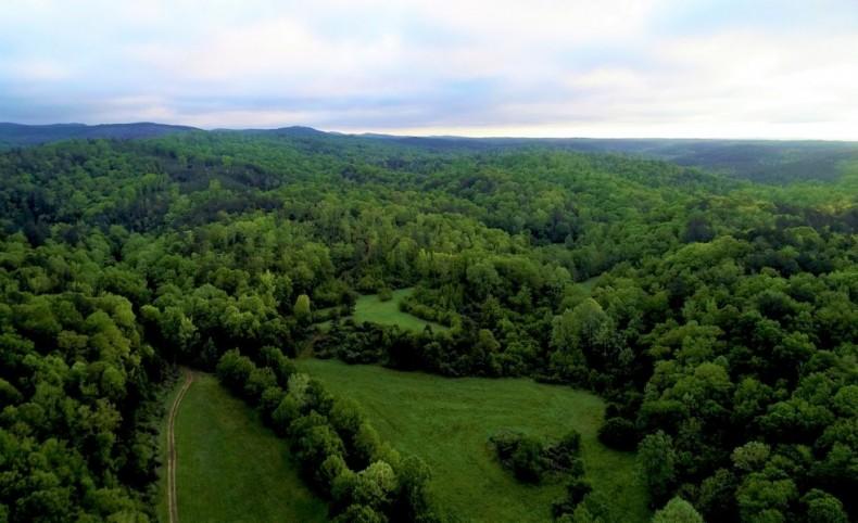 Barton Ridge Plantation - 1309 Acres
