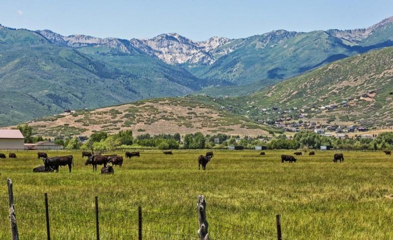 Equestrian Retreat with Amazing Timpanogos Views