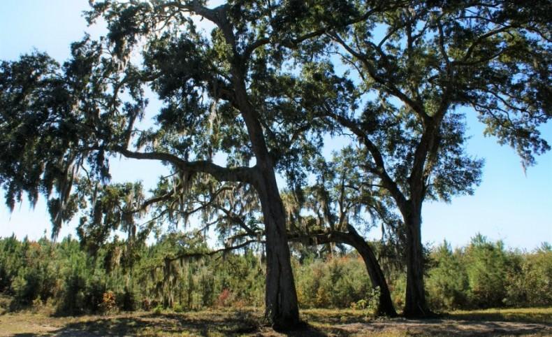 Black Creek Plantation