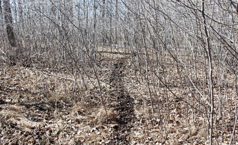 Rare Chance to Own 83+/- Acres in the Scenic Landscape of Ozaukee County, WI