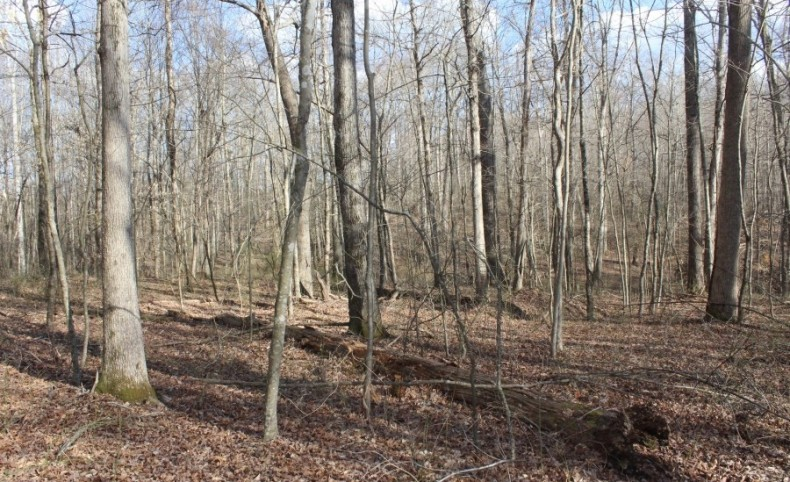 51.82 Acres with Horse Riding Business joining Mammoth Cave National Park